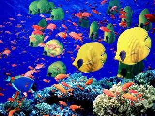 обои Рыбки на рифе фото
