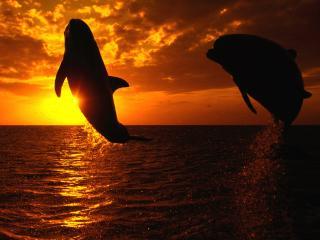 обои Два дельфина ночью выпрыгнули из моря фото