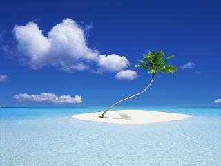 обои Пальма на песочном островке,   в прозрачном голубом море фото
