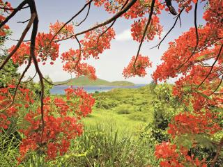 обои Ветви в ярком красном цвету фото