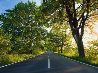 обои Ясная дорога вдоль зеленых деревьев фото