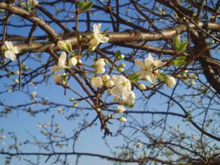 обои Весна - цветочки фото