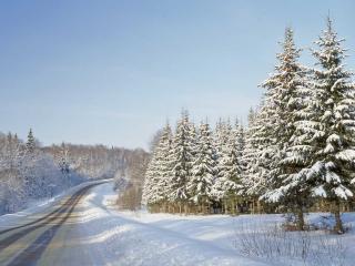 обои Зимняя дорога вдоль елей фото
