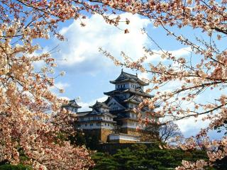 обои Замок Химэдзи на фоне цветущей сакуры фото