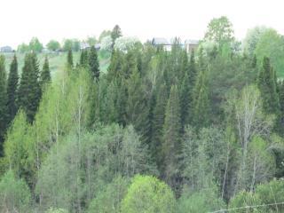 обои Деревня за лесом фото