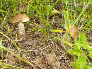обои Два грибка фото