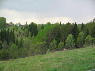 обои Лес за околицей фото