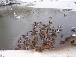 обои Зимнее озеро фото