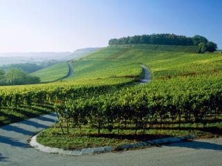 обои Дорога вдоль зеленых полей с саженцами фото