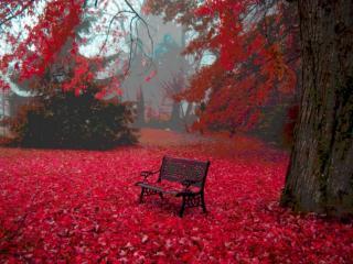 обои Красный листопад фото