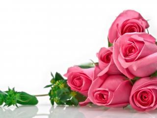 обои для рабочего стола: Шесть роз - букет на белом фоне