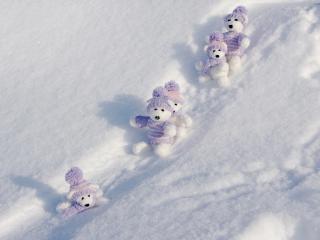 обои Веселые белые медвежата фото