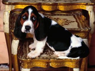 обои для рабочего стола: Собака сидит в деревянном кресле