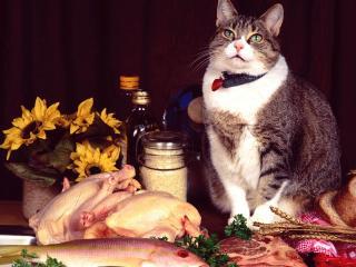 обои Кот за накрытым столом фото