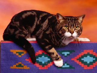обои Перепуганный кот на спинке дивана фото
