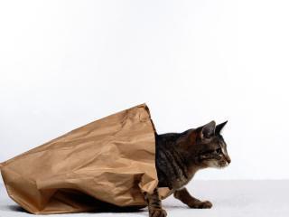 обои Кот в бумажном пакете фото