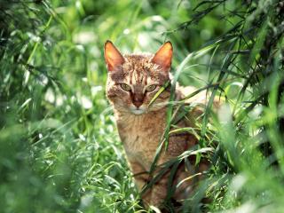 обои Кот на фоне зеленой травы фото