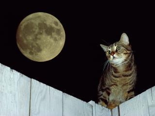 обои для рабочего стола: Кот на заборе ночью