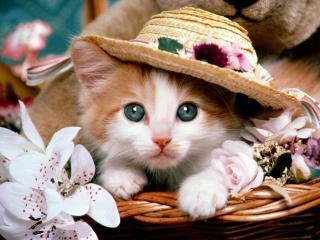 обои Котенок в корзине в шляпе фото