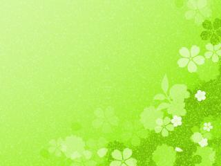 обои Салатовый фон с цветами фото