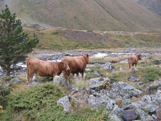 обои Животные в горах фото