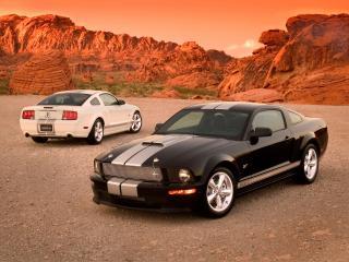 обои Shelby GT двое фото