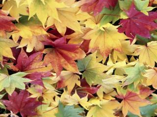 обои Ковер из листьев разноцветный фото