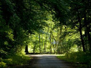 обои Лесная дорога в тени фото