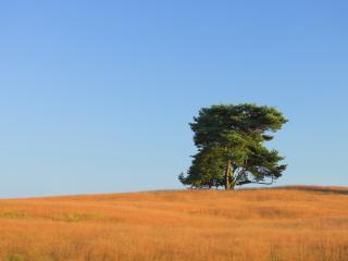 обои Одинокое дерево голубое небо фото