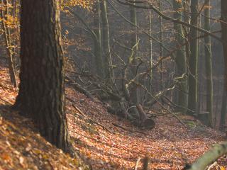 обои Спиленное дерево в лесу фото