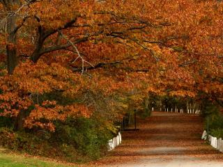 обои Красивая дорожка в осеннем парке фото