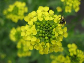 обои Желтый цветочек фото