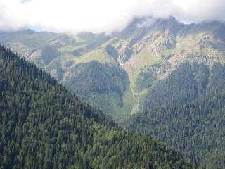 обои Туман в горах покрытые лесом фото