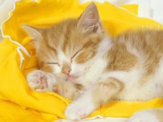 обои Котенок спит на желтом одеяле фото