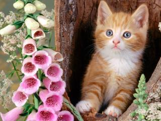 обои Рыжий котенок выглядывает из дупла дерева фото