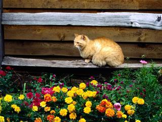 обои Кот сидит на лавочке возле цветов фото