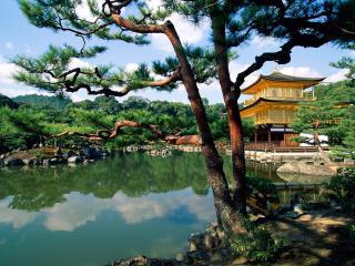 обои Ландшафтный дизайн с прудом, у японского дома фото