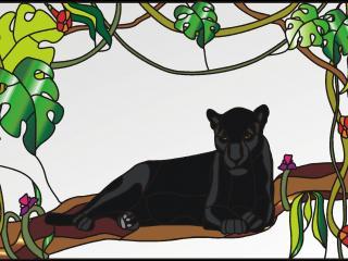 обои Картинка джунгли лианы фото