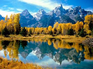 обои Осенний лес на берегу озера фото
