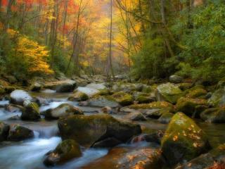 обои Ручей среди осеннего леса фото