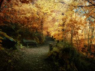 обои Уютная скамейка в заросшем парке фото