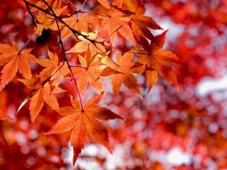 обои Красное золото осени фото