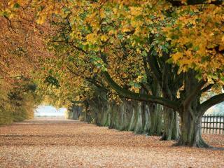 обои Осенние деревья вдоль дороги фото