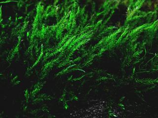 обои Красивая зеленая трава фото