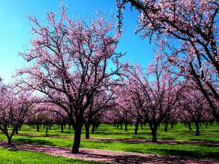 обои Розовый сад фото