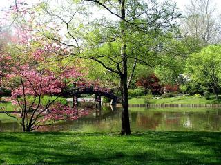обои Мостик над озером в саду фото