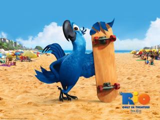 обои Blu in Rio Movie скейт фото