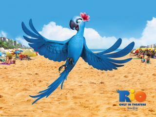 обои Jewel in Rio Movie птица фото
