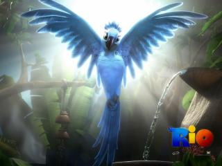 обои Rio Movie птица фото