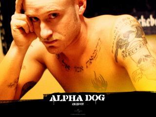 обои Alpha Dog думает фото